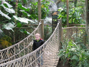 Buffalo Zoo Rainforest
