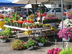 East Aurora Flea Market - Plants