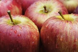 Becker Farms  – U-Pick Apples, Peaches and Plums – Gasport, NY