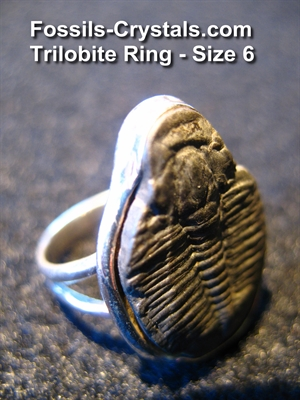Trilobite Ring – Sterling Silver- Size 6 – Fossils-Crystals.com