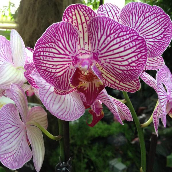 Orchid Show At Buffalo Botanical Gardens February 27 28