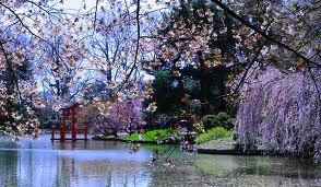 Cherry Blossom Festival At Brooklyn Botanical Garden April 29 30 2017 Brooklyn Ny
