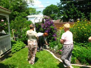 garden walks amherst springville lockport hamburg grand island and snyder clevehill july. Black Bedroom Furniture Sets. Home Design Ideas