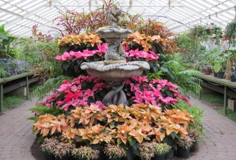 Buffalo Home And Garden Show 2020.Buffalo Botanical Gardens Poinsettia And Railway Exhibit
